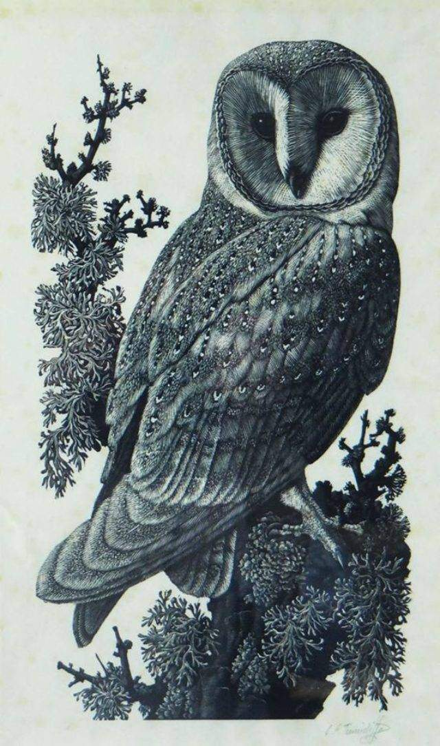 Barnowl (woodcut)